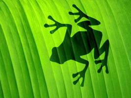 shadow frog by michelleway