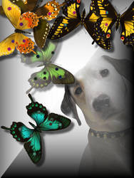 butterfly dogg by Sadiekins2014