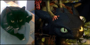 My Toothless Cat by Scethdra
