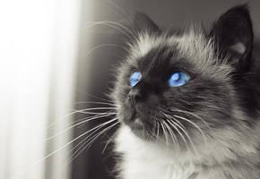 sapphire blue by Thunderi