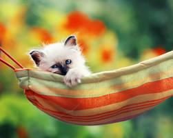 in the hammock by Thunderi