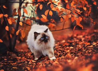 Autumn fluffball by Thunderi