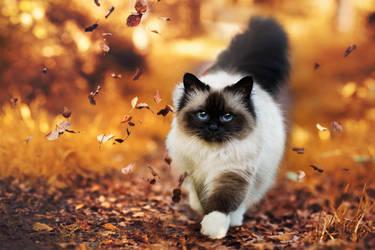 autumn path by Thunderi