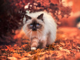 surrounded by leaves by Thunderi