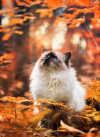 autumn forest by Thunderi