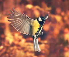 Bird friend by Thunderi