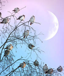waxwings and the moon by Thunderi