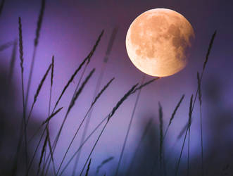 Night moon 27.7. by Thunderi