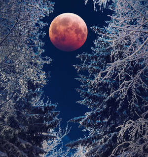 Blood Moon and Winter forest by Thunderi