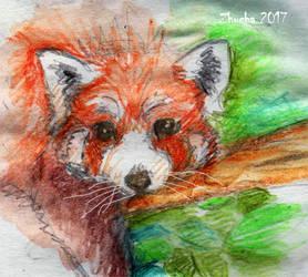 Red panda by Zhucha
