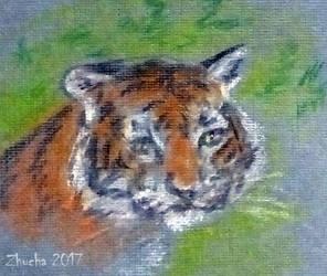 Tiger by Zhucha