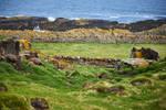 Isle of May - 8 by IanStruckhoff