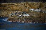 Isle of May - 14 by IanStruckhoff