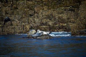 Isle of May - 15 by IanStruckhoff
