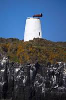 Isle of May - 16 by IanStruckhoff