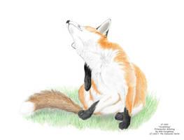 Scratching by AlexKSFox