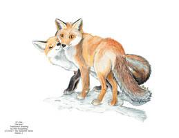 Fox love by AlexKSFox