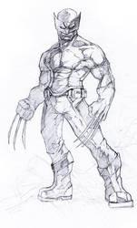 Wolverine by kamgates
