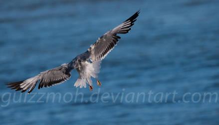As free as a bird... by Guizzmoh