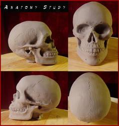SkullAnatomyStudy by MumboJumbo