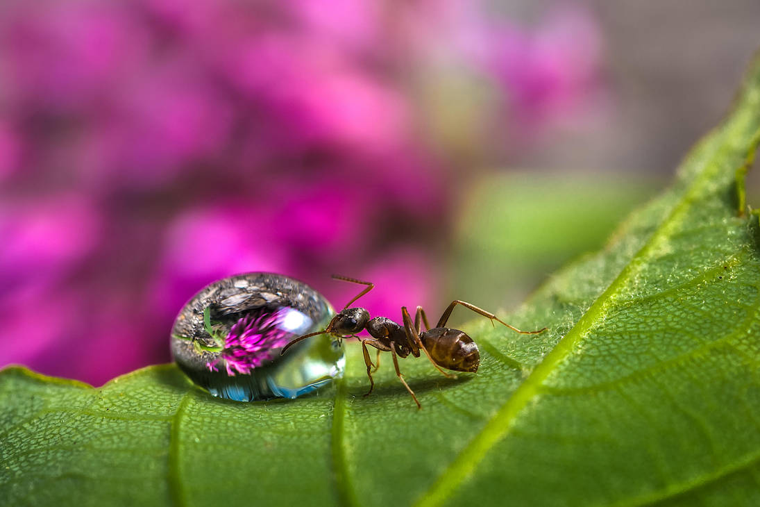 Drinking Ant by StefanPrech