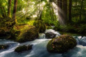 Deep Forest by StefanPrech