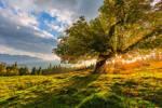 Big old Tree by StefanPrech
