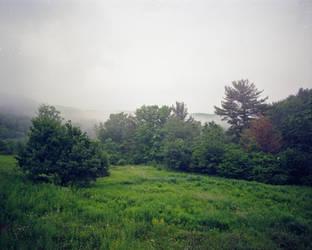 Backyard Fog by Mooseushi