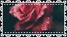 flower stamp #2 by pteronarcophobe