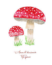 Fly agaric by Endless-Ness