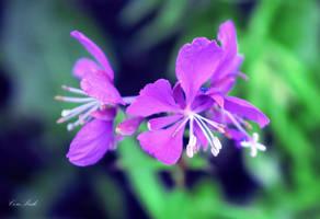Purple charm by CorePrideVU