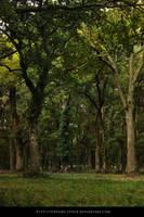 Forest- Stock Streamy by streamy-stock