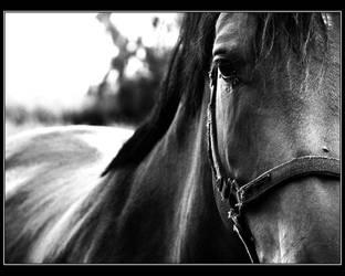 Horse Study I by netheka