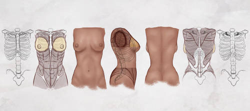 AS Drawing the Female Torso by CGCookie