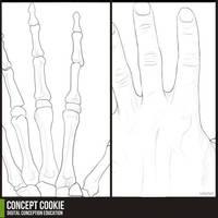 Anatomy Resource: Hands by CGCookie