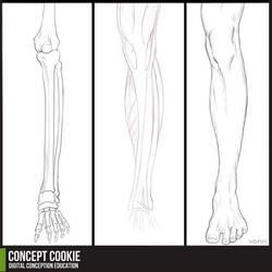 Anatomy Resource: Legs by CGCookie
