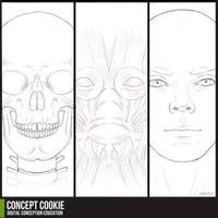 Anatomy Resource: Head by CGCookie