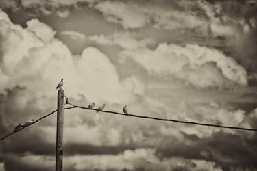 Les Pigeons by ImaginariumBlahnik