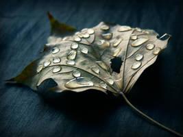 autumn sorrows II by JoannaRzeznikowska