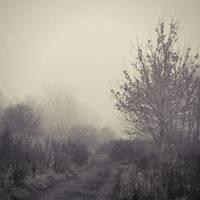 Through The Autumn IV by JoannaRzeznikowska