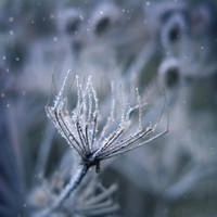 frozen breath III by JoannaRzeznikowska