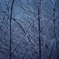 Blue Winter by JoannaRzeznikowska