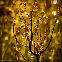 golden dreams by JoannaRzeznikowska