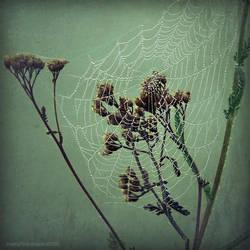 blind feelings II by JoannaRzeznikowska