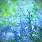 blue spring by JoannaRzeznikowska