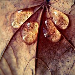 ...shine for me...III by JoannaRzeznikowska