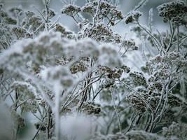 winter whispers VI by JoannaRzeznikowska