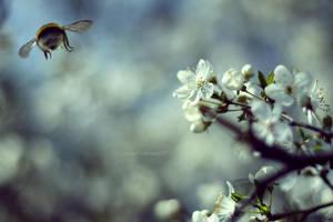 spring for you VI by JoannaRzeznikowska
