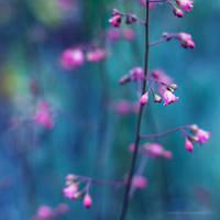 finding beauties II by JoannaRzeznikowska