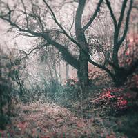 exploring dreams XI by JoannaRzeznikowska